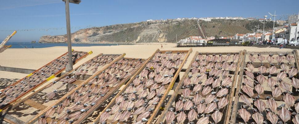 Sardiner-i-Nazare-sardinas