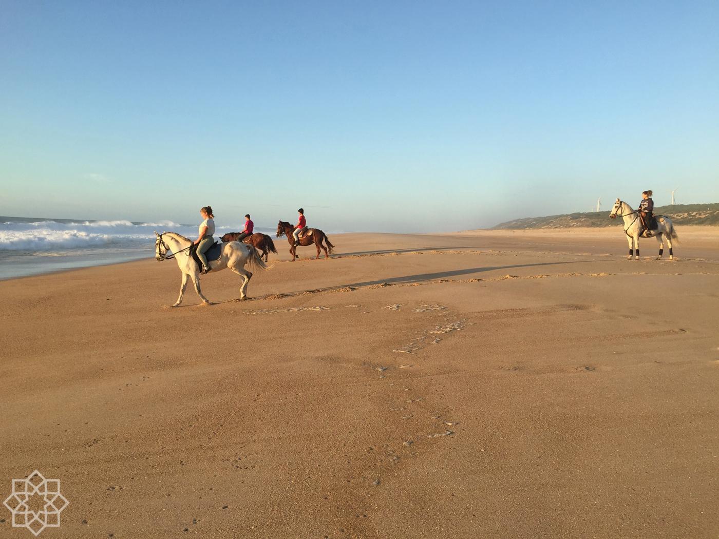 Hästar på Praia do Norte